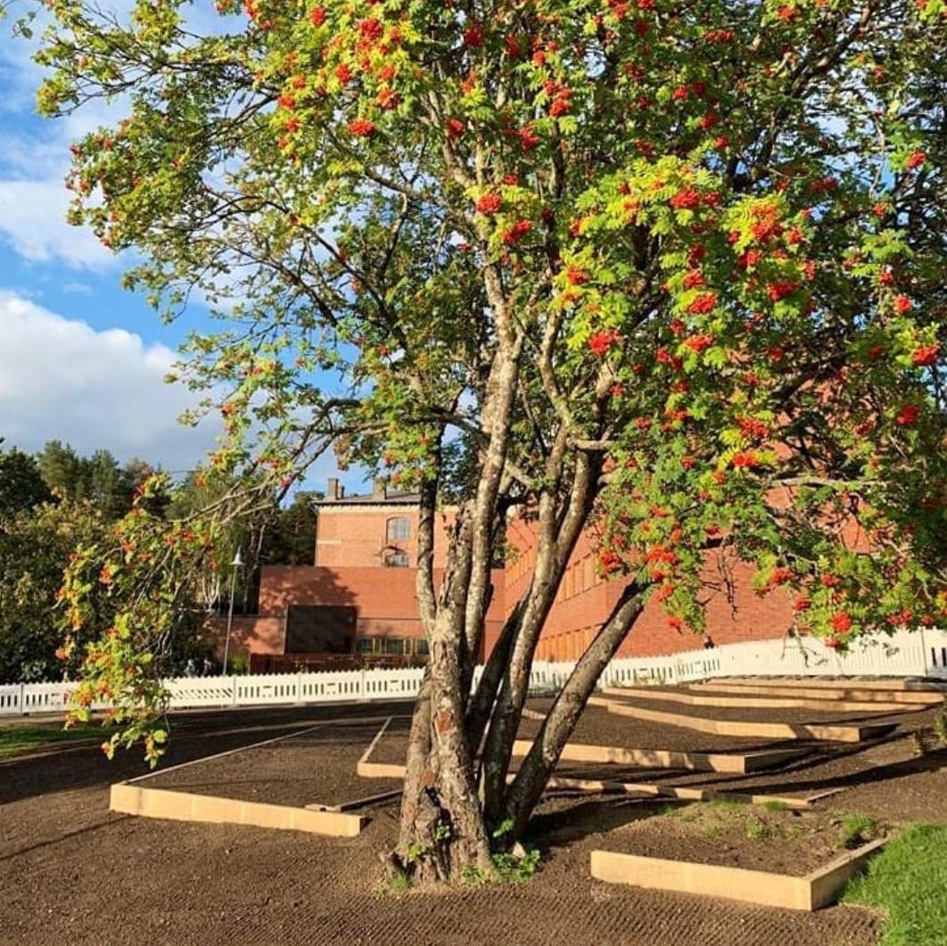 Accoya on säänkestävää ja myrkytöntä puuta, ja se sopii erityisesti maarakentamiseen